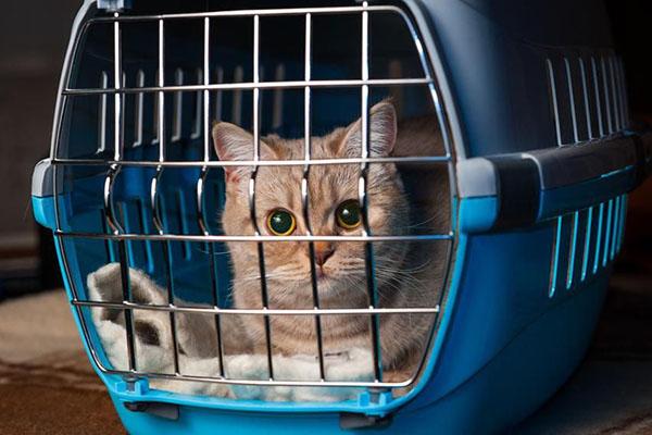 Переноска для перевозки животных