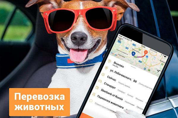 Животные в такси Ситимобил